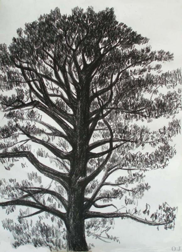 olivier jeunon,finistère,pierre noire,arbre